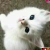 两只小野猫(上图号)的微信二维码